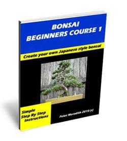 How to Bonsai
