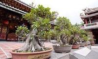 Bonsai Gardening Secrets