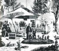 Bonsai History