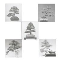 5 bonsai styles