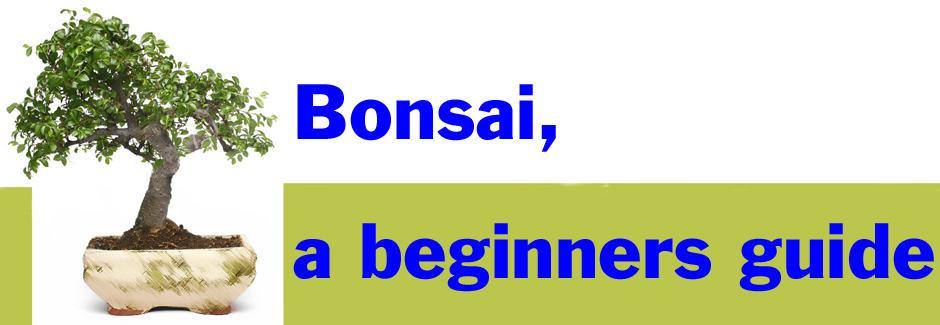 Bonsai a beginners guide
