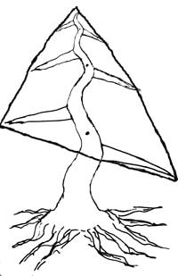 Bonsai triangular 200
