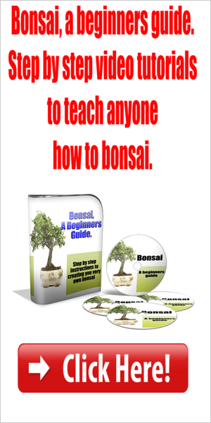 How to bonsai