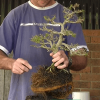 Root Pruning and Re-potting.mp4 2015.07.08 11.50.18.682