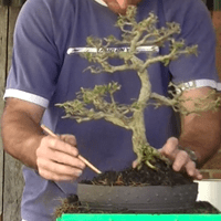 Root Pruning and Re-potting.mp4 2015.07.08 11.58.51.464